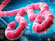 エボラと黒魔術 ― 西アフリカで囁かれる「エボラの呪い伝説と白人の陰謀説」