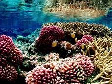 中国密漁船の目的は本当に赤サンゴか? 燃料費を出資しているのは誰だ?