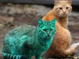 【動画】全身緑色のネコが発見される!! UMAか、突然変異か…!?