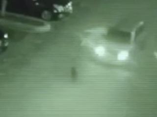 【驚愕動画】監視カメラは見た!! 宇宙人が車に轢かれる瞬間!