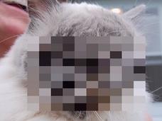 【イイ話】目3つ、口2つ …! 「2つの顔を持った猫」を愛した飼い主
