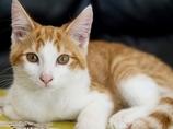 謎のネコ集団失踪事件、突然消えた221匹! 犬の餌にされている可能性も?