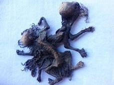 恐ろしいバケモノの遺骸が牧場で見つかる!! 酪農家たち戦慄「チュパカブラだ」=チリ
