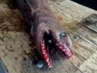 """""""25の歯列と300本の歯""""を持つ、恐すぎるサメ「ラブカ」出現!! 漁師も困惑「別の時代からやって来たようだ」"""