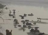 【閲覧注意】ガンジス川岸に少女30人以上の水葬遺体が…!! 残酷で神秘的なインドの光景