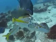 """""""体を半分食べられた魚""""が必死で逃げ続ける ― 自然の厳しさを痛感する映像!"""