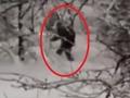 イエティ、ロシアに現る!? 森を歩く毛むくじゃらの巨人をカメラが捉える!!