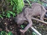 【衝撃動画】ゴラム? 新種のUMA? 完全に正体不明な謎の生物出現!!=マレーシア