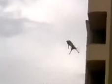 【衝撃動画】自殺か、それとも? ビルの屋上から飛び降りる犬が激写される!!