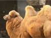 """世界""""獣姦""""お国事情! 外国人に聞いた、性的に好みの動物(最新研究)"""
