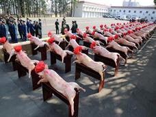 赤いリボンの豚、豚、豚……中国・人民解放軍兵士に贈られた旧正月の贈り物がシュールすぎ!?