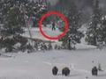 ビッグフット、今度はアメリカに現る!? 公園を散歩する4体の謎の巨人!