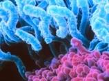 ウンチ移植でデブがうつった!?  やはり「デブ菌」は存在するのか?