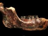 稀に見る大きな歯、強靭な顎…台湾沖で発見された新種の古代人とは?
