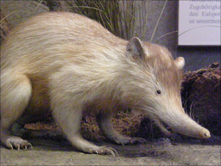 人間のエゴで絶滅の危機に瀕している動物たち ― 絶滅危惧種10選