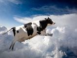 【緊急考察】大地震の前兆か!? 続出する動物の異常行動
