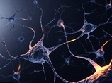 夢遊病者や酔っぱらいは、なぜ壁にぶつからないのか? 驚きの「脳内GPS機能」が研究で明らかに!