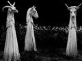 魔法のワンド(杖)、魔法の書…! ヨーロッパを代表する現代の魔女にインタビュー!