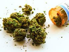 タバコやアルコールよりも安全!? アメリカで加速するマリファナの解禁の流れ