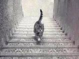 このネコは階段を「下りている」?「上っている」? 錯視画像に議論沸騰!!