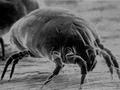 【閲覧注意】読んだら眠れない! 我々のベッドに潜む危険な生物&物質トップ10!
