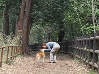 【異種間の絆を証明!? 人と犬 見つめ合いと触れ合いで「愛情ホルモン」増加