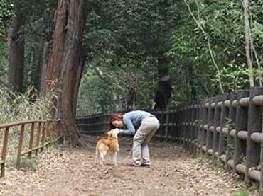 異種間の絆を証明!? 人と犬 見つめ合いと触れ合いで「愛情ホルモン」増加