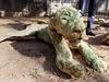 ミイラ化した動物園 ― 人間だけではない、紛争地区の悲しい光景=ガザ地区