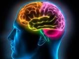 【脳科学】勉強してもムダ!?  「頭の回転の速さは遺伝(CADM2)で決まっている」