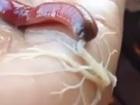 【動画】エイリアンとしか思えない!! キモすぎる「白い糸状の物体」を吐き出す生物の正体は?