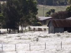 大量のクモが空から降ってきた! 知られざるクモの生態=オーストラリア