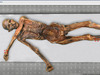 DNA鑑定で判明?5300年前のミイラ「アイスマン」の死因とは?