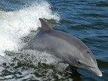 「日本の根拠弱い」イルカ漁問題に、社会学者の古市憲寿氏が言及