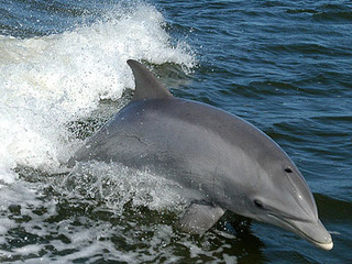 【「日本の根拠弱い」イルカ漁問題に、社会学者の古市憲寿氏が言及