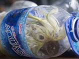 戦慄!! 絶滅危惧種のオウムがペットボトルに詰め込まれる! 密猟大国インドネシアの闇!