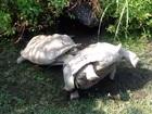 【動画】友達を助けるカメの姿が素晴らしい!! 動物から学ぶ、他者を思いやる気持ち