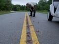 「整列したスパゲッティが路上で動いてる!!」 学者も解明できぬ生物の異常行動=米