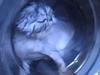 猫、罰として洗濯機に入れられる…! 虐待動画に非難殺到=ロシア