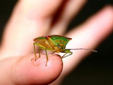 女王様から地味に嫌われる「虫フェチ」たち ― 30代男の身に起きた特殊な災難とは?