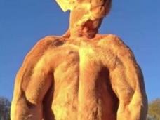 「抱かれたいカンガルーNo.1」筋肉隆々の男前カンガルーが話題=オーストラリア
