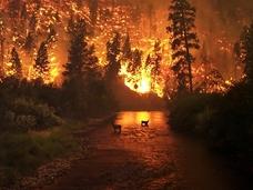 森林火災が地球を冷却する?  火災と温暖化の意外過ぎる関係とは?