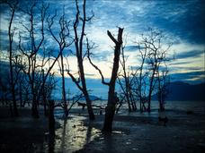 又吉にも知ってほしい! 太宰治が心中した玉川上水に伝わる痛ましい都市伝説とは?