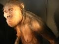 """""""ひ弱なサル""""の近親交配が人類を生んだ!? 科学者「障がいや奇形こそ進化に重要な役割」"""