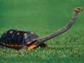 カメの祖先には甲羅がなかったことが判明! 爬虫類よりも恐竜に近い見た目に驚愕!