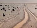 「デスバレーの動く石」の謎に、新たな説が浮上! バクテリアが原因か?