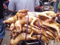 国際批判も無視! 1万匹以上の犬を虐殺する、中国ユーリン「犬肉祭り」