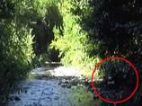 【衝撃動画】川で沐浴するビッグフットが激撮される!! 器用に体を拭く様子がスゴい!