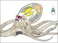 タコの全遺伝情報、ついに解読される!! 科学者が暴露「エイリアンかもしれない」