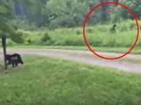 【衝撃動画】森の中で「ビッグフット」に遭遇→犬の威嚇にビビって逃げ出す!!