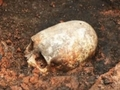 エイリアンの頭蓋骨か、部族の奇習か!?  長くて尖った頭蓋骨がロシアの遺跡で発見される!